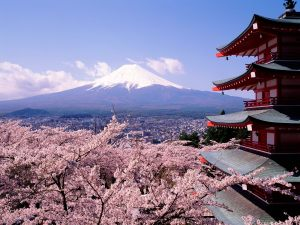 Mount Fuji with Cherry Blossoms in the Spring